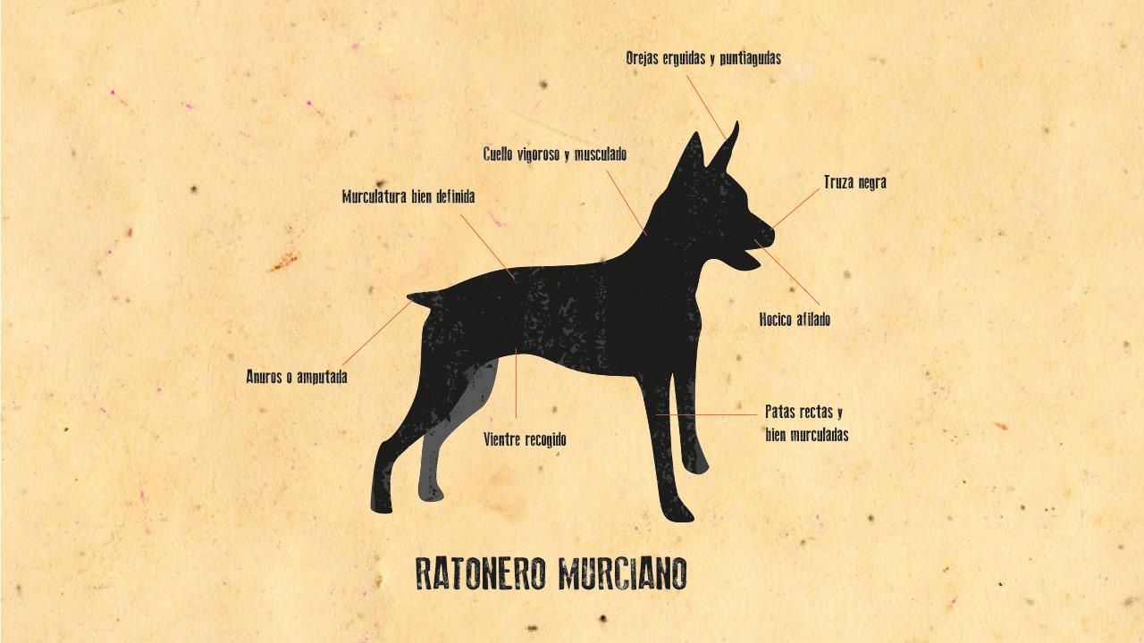 Ratonero Murciano | Gurulab